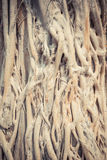 Natural pattern of roots tree with vintage filter style Royalty Free Stock Photos