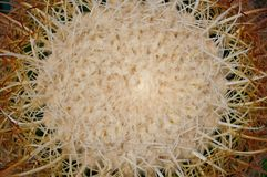Natural pattern of thorns cactus plants Stock Photography