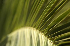 Natural patterns. A pattern formed by leaves Stock Image