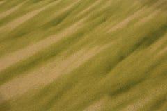 Texture of Algae on Beach Sand royalty free stock image