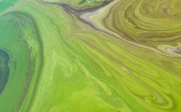 Natural patterns on Ukrainian river Dnepr covered by cyanobacterias Royalty Free Stock Photo