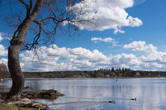 Natural Peace. Peaceful and Scenic view from Sigtuna, Sweden. A suburb from the bustling Swedish capital of Stockholm royalty free stock photos