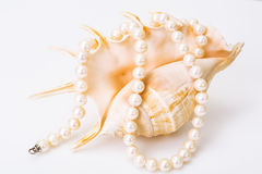 Natural pearl white beads Royalty Free Stock Image