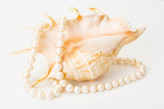 Natural pearl white beads Royalty Free Stock Photos