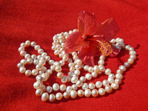 Natural pearls necklace and hibiscus flower Stock Image