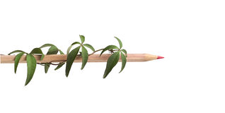 Natural pencil Royalty Free Stock Photo