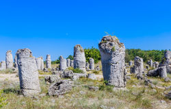 The natural phenomenon Pobiti Kamani, known as The Stone Forest Royalty Free Stock Photography