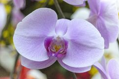 Natural photos: Popularly grown orchids Viet Nam