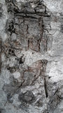 Natural pictures in bark Stock Image