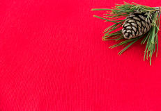Natural Pine Cone inside a Pine Tree Twig Royalty Free Stock Image