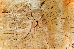 Natural Pine Wood Texture Royalty Free Stock Photo
