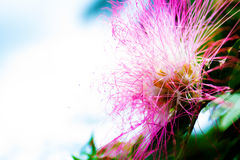 Natural pink flower. Close up Royalty Free Stock Photo