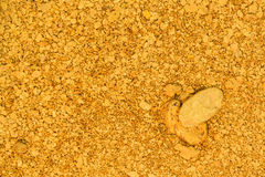 Natural Placer Gold Stock Images