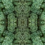 Natural plant elements seamless pattern. Light flower buds of ornamental cabbage and green leaves. stock photo
