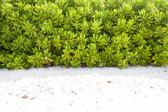 Natural plant wall on the beach. Tropical plant wall on the beach Stock Photo