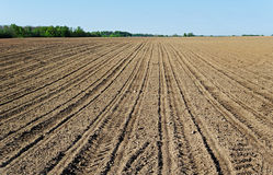 Natural plowed field. Royalty Free Stock Photography