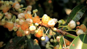 Natural pollination stock footage