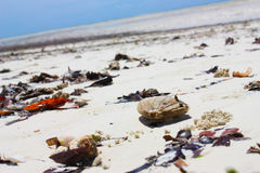 Natural pollution on the tropical beach. Royalty Free Stock Photos