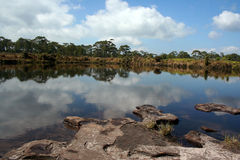Natural pond in front of pine forest. Stock Photos