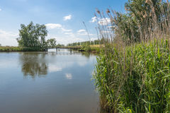 A natural pond with lots of reeds along the bank Royalty Free Stock Images