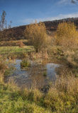 Natural pond on a nature reserve in yorkshire Stock Photos