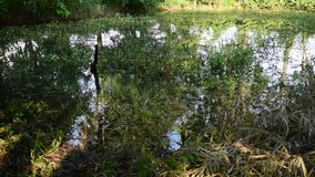 Natural pond stock video