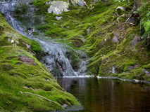 Natural pond. Small river flowing into a natural pond surrounded by moss royalty free stock photography