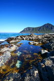 Natural pool. At low tide in the lofoten islands with algae Royalty Free Stock Image