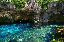 Crystal clear blue natural pool `gran cenote` in Mexiko royalty free stock photo