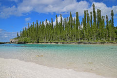 Natural Pool at Ile des Pins with row of tall pine trees and white sandy beach Royalty Free Stock Photos