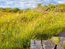 Natural Preserve Wetland. Grass and wetland and a path in a natural preserve near the town of Varberg, Halland county, Sweden Stock Image