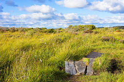 Natural Preserve Wetland. Grass and wetland and a path in a natural preserve near the town of Varberg, Halland county, Sweden Stock Photo