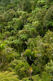 Natural Pristine Bush Stock Images