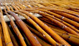 Wood tissue - willow Royalty Free Stock Image