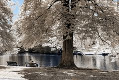 Natural public park in Strasbourg, infrared view, sunny day royalty free stock photography