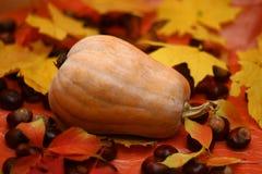 Natural pumpkin Stock Photos