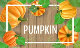 Pumpkin frame on wood background for autumn. Natural pumpkin frame with leaf, on brown wood texture background. Realistic vector illustration for autumn, harvest Royalty Free Stock Photo