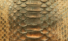 Natural python skin Royalty Free Stock Photos
