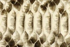 Natural Python Skin Royalty Free Stock Images