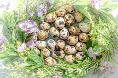 Natural quail eggs in floral nest in sunny light on blue background. Happy Easter, spring, healthy life concept royalty free stock photo