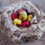 Natural quail eggs in the nest Stock Photo