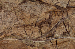 Natural Rain Forest Brown marble texture. Polished slab of a natural indian Rain Forest Brown marble Stock Photos