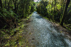 Natural rain forest trial in matheson lake fox glacier new zeala Royalty Free Stock Photography