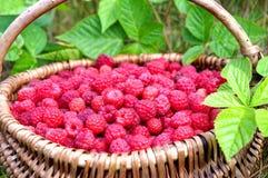 Natural Raspberries Royalty Free Stock Photos