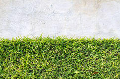 Natural real green grass field background Stock Image