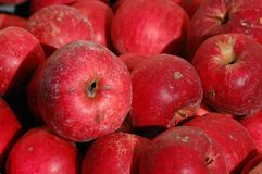 Natural red apples Royalty Free Stock Photo