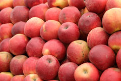 Natural red apples. A lots of natural red apples Stock Image