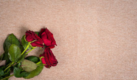 Natural red roses Royalty Free Stock Photography