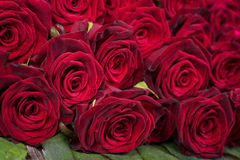Natural red roses Royalty Free Stock Images