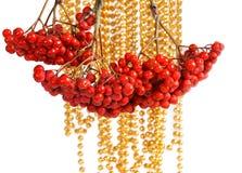 Natural Red Rowan Royalty Free Stock Images